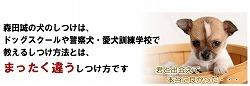 犬のしつけ森田03.jpg